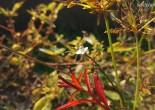 누운주름잎